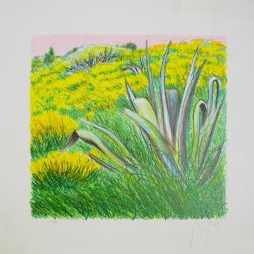 Campo di agave e ginestre